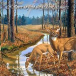 After The Rain Quot Whitetail Deer Wildlife Artist Randy Mcgovern