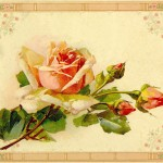 Antique Images Rose Clip Art Yellow Image From