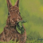 Beautiful Rabbit Paintings Animal Vista