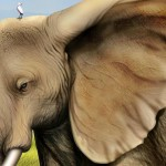Best Elephant Painting Collection