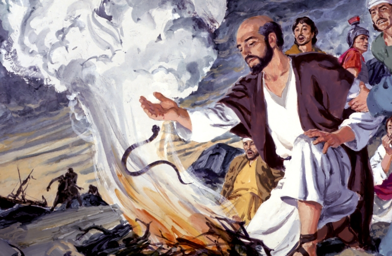 Boldness Suffering Quick Powerful Bible Study