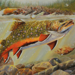 Brook Trout Featured Stamp Outdoors Sam Cook