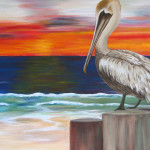 Brown Pelican Admiration