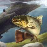 Brown Trout Painting Stan Cox Fine Art Prints And