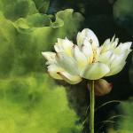 Brush Painting Water Lily Flower Pictures
