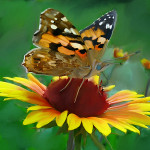 Butterfly Painting Picture Studio Album