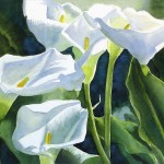 Calla Lily Paintings For Web Search Pic