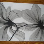 Charcoal Paintings Art Gallery For Sale Flowers