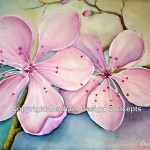 Cherry Blossoms Original Watercolor Paintings For Sale