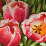 Closeup Painting Three Red Pink Glowing Tulips Realistic Flower