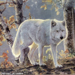 Custom Famous Acrylic Painted Snow Wolf Portrait Painting