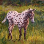 Daily Painting Projects Young Appaloosa Oil Horse Art Farm