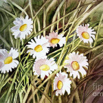 Daisy Paintings Floral Flower
