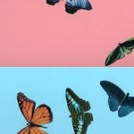 Damien Hirst Paintings Butterfly
