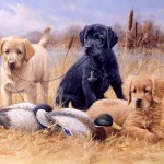 Dog Artwork Hunting Art And Sporting Paintings