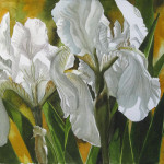 Double White Iris Painting Alfred Fine Art