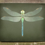 Dragonfly Painting Flickr Sharing