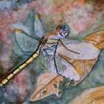 Dragonfly Painting Watercolor And Pen