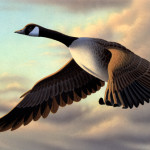 Duck Stamp Painting Canada Goose