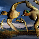 Duck Stamp Painting Green Winged Teal Ducks