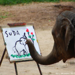 Elephant Painting Chiang Mai