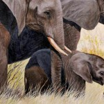 Elephant Painting For Sale Ebay Now Reserve Price How