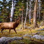 Elk Wildlife Paintings Original And Big Game