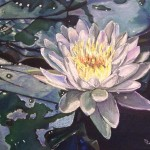 Fine Art Floral Oil Paintings