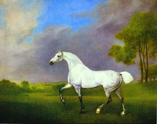 For Sale George Stubbs Grey Horse Paintings