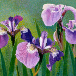Four Iris Acrylic Watercolor Painting Rag Paper