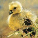 Free Pictures Art Animal Oil Painting