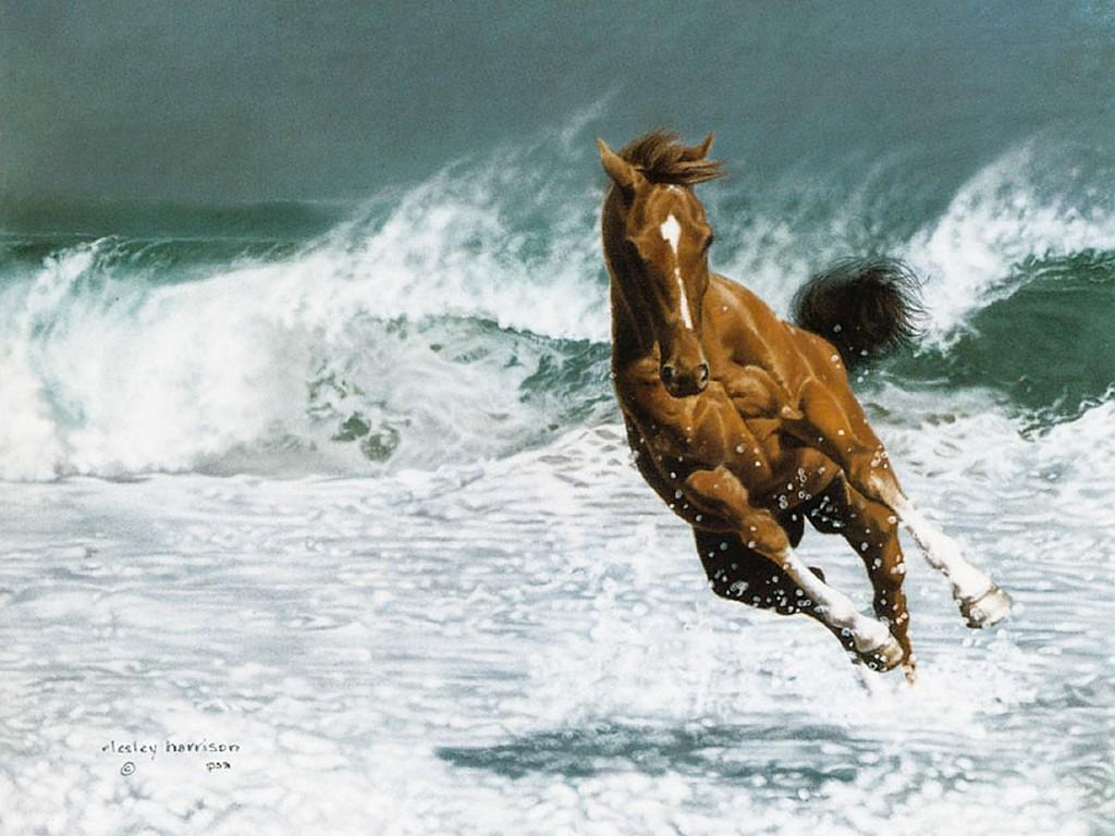 Free Pictures Art Horse Oil Painting