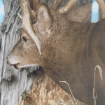 Friend Facebook Groups View Topic Whitetail Deer Painting