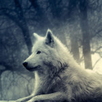 Full View And White Wolf Painting Resolution