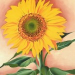 Georgia Keeffe Paintings Sunflower From Maggie