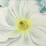 Georgia Keeffe White Flower Pictify Your Social Art