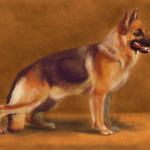 German Shepherd Painting Study Scribblelizard Deviantart
