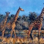 Giraffe Paintings Giraffes Terry