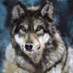 Gray Wolf Barefoottiger Traditional Art Paintings Animals