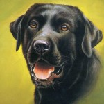 Grown Dog Drawing Painting Free Pet Category