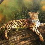 Hand Painted Animal Oil Paintings Oilpaintingz