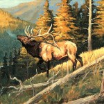 High Country Bugler Elk Painting Framed Print