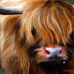 Highland Cow Farm Animal Art Michelle Wrighton Fine And