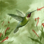 Hummingbird Painting Sean Seal Ruby Throated Fine Art