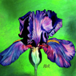 Iris Painting Laura Bell Fine Art Prints And Posters For