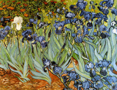 Irises Van Gogh Vincent Oil Painting Reproduction Canvas