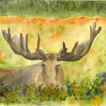 Journey Moose Nap Original Watercolor Napping Painting