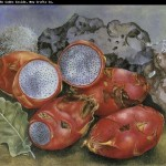 Kahlo Essay Analysis Paintings Fruit