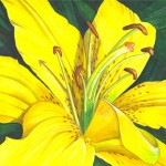 Lemon Lily Painting Catherine Mcelroy Fine Art