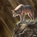 Lone Wolf Giclee Paintings